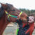 Thumb 4-H'er, mustang hope to make hay in Ohio