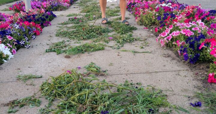 Pull your weight: Help sought in war on weeds